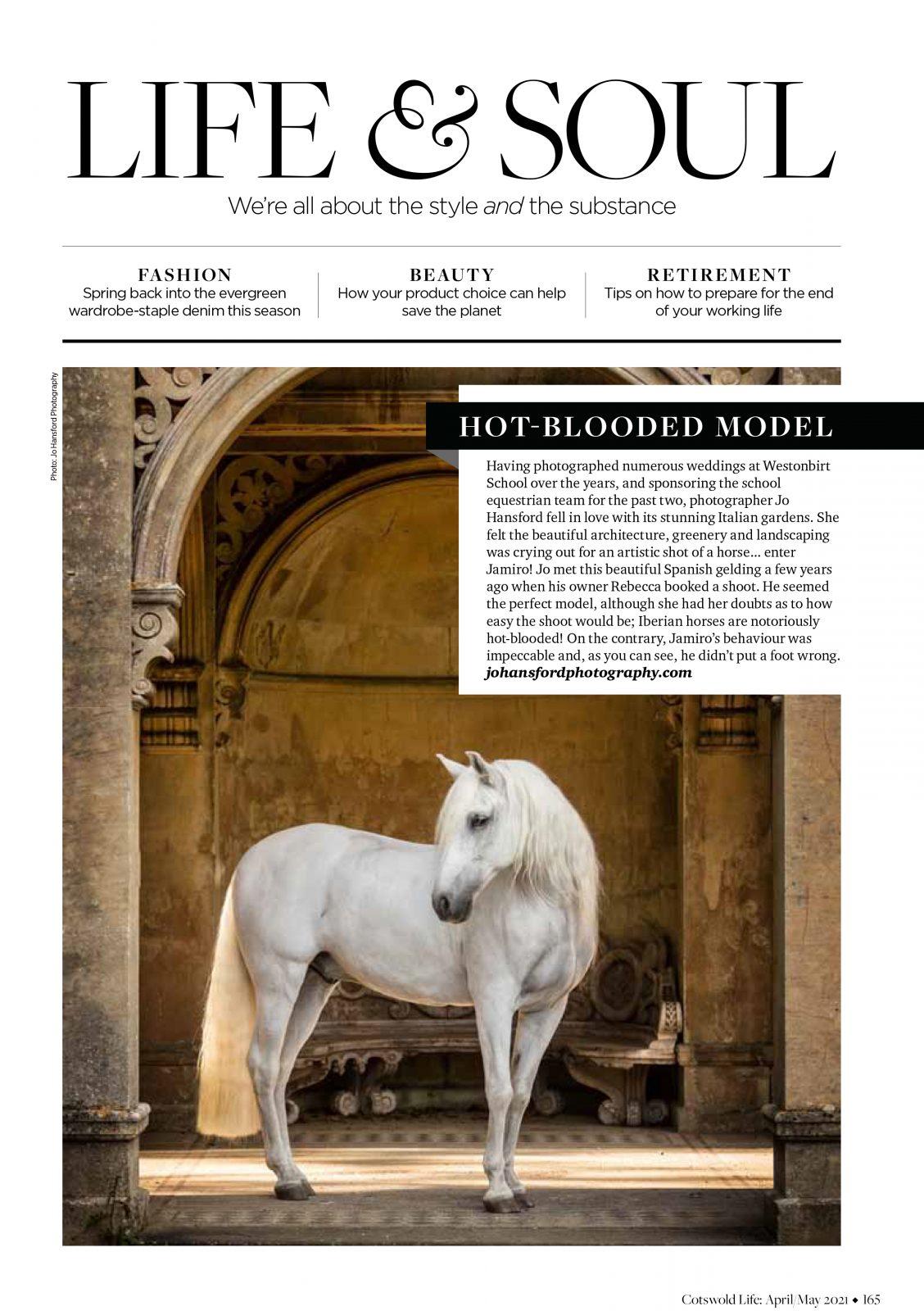 Horse photographer Cotswolds Jo Hansford